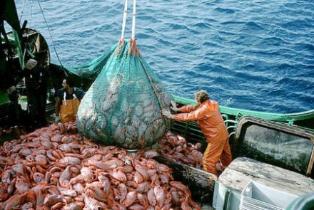 559 Overfishing in Africa